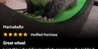 Opossum tested, Amazon approved...
