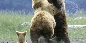 It is not wise to mess with mamma bear
