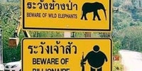 Thailand perfectly depicts Western poachers
