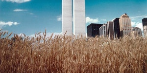 A wheat field in the middle of Manhattan, 1982.