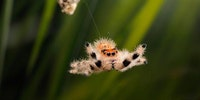 When jumping spiders attac. #burnthemall