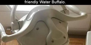 Friendly Water Buffalo wishes you a pleasant short sleep.