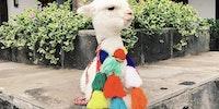 Llamas of Pperu