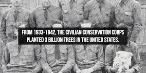 People have known about trees for a long while.